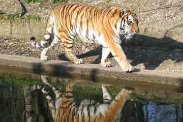 Munchen - Tierpark Hellabrunn