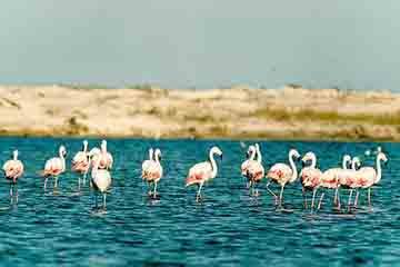 Aveiro - Reserva Natural das Dunas de Sao Jacinto
