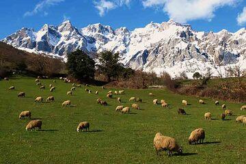 Picos de Europa - Mogrovejo