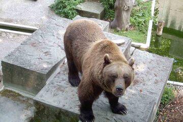 Berna - Groapa Ursilor