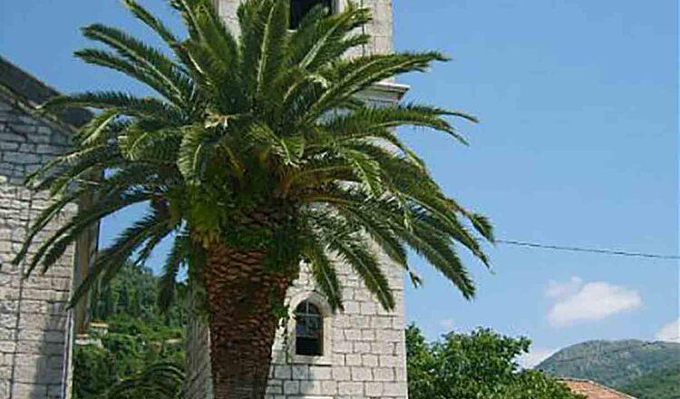 Biserica Sf Roko