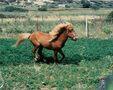 Poneii din Skyros