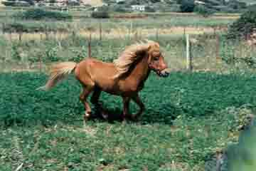 Skyros - Poneii din Skyros