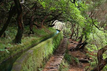 Madeira - Levada