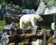 Gradina Zoologica Schonbrunn