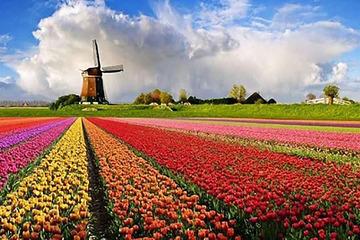 Haarlem - Campurile de lalele