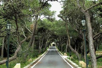 Rabat - Buskett