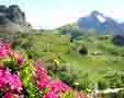 Gradina Botanica Alpina