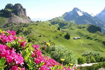 Interlaken - Gradina Botanica Alpina