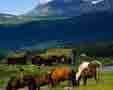 Parcul National Dovrefjell