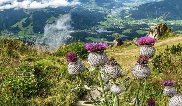 Gradina de flori alpine